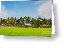 Fresh Green Rice Field Greeting Card