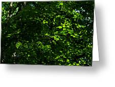 Fresh Linden Tree Foliage - Featured 2 Greeting Card