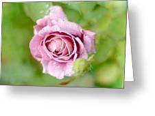 Fresh Morning Rose Greeting Card
