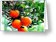 Fresh Orange On Plant Greeting Card