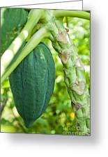 Fresh Papaya Greeting Card