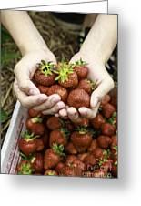 Fresh Picked Strawberries Greeting Card