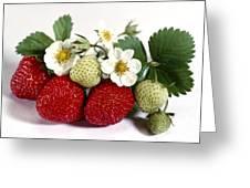 Gardenfresh Strawberries Greeting Card