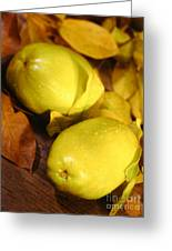 Fresh Quince Greeting Card