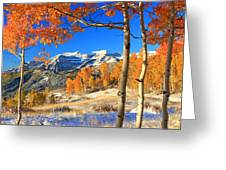 Fresh Snow In The Aspens. Greeting Card