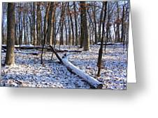 Fresh Snow In The Woods Greeting Card