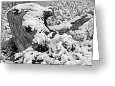 Fresh Snow On A Tree Stump Greeting Card