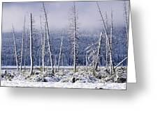 Fresh Snowfall And Bare Trees Greeting Card