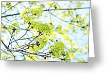 Fresh Spring Green Buds Greeting Card