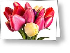 Fresh Spring Tulip Flowers Greeting Card
