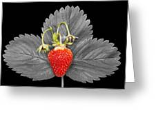 Fresh Strawberry And Leaves Greeting Card