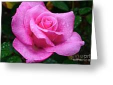 Fresh Sweet Surrender Rose Greeting Card