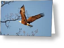Freshening The Nest Greeting Card