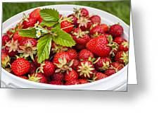 Freshly Picked Strawberries Greeting Card