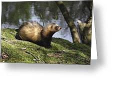 Fret On The Bank Of A Pond In Drenthe Netherlands Greeting Card