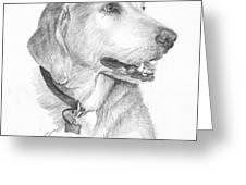 Friendly Dog Pencil Portrait  Greeting Card