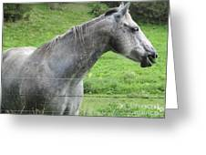 Friendly Gray Horse Greeting Card