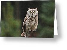 Friendly Owl In The Forest Greeting Card