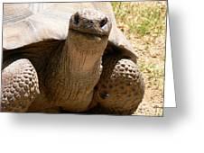 Friendly Tortoise Greeting Card