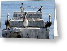 Pelican Friends Greeting Card
