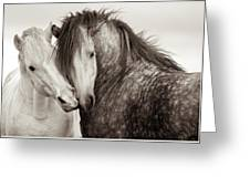 Friends IIi Greeting Card by Tim Booth