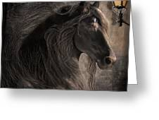 Friesian Glow Greeting Card