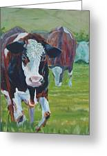 Friesian Holstein Cows Greeting Card