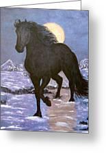 Friesian Horse Blue Moonlight Setting Greeting Card