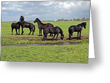 Friesian Horses Greeting Card