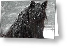 Friesian Snow Greeting Card by Fran J Scott