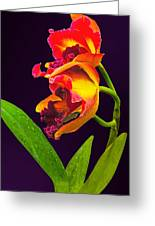 Frilly  Red And Yellow Orchids Greeting Card