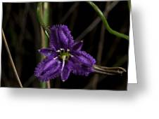 Fringed Lily Climber Greeting Card