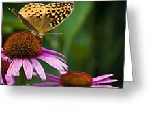 Fritellary On Cone Flower Greeting Card