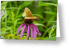 Fritilarie Butturfly On Purple Cone Flower Greeting Card