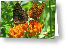 Fritillaries  Greeting Card