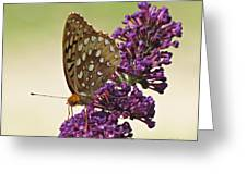 Fritillary Butterfly On Buddleia Greeting Card