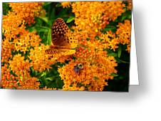 Fritillary On Butterfly Weed Greeting Card