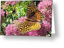 Fritillary On Meteor Greeting Card