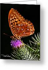 Fritillary On Thistle Greeting Card
