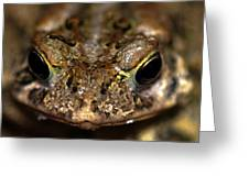 Frog 2 Greeting Card