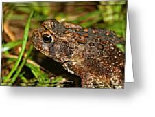 Frog 2 Greeting Card