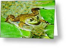 Frog  Abby Aldrich Rockefeller Garden Greeting Card