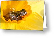 Frog And Daffodil Greeting Card by Jean Noren