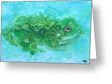 Frog And Fly Blues Greeting Card