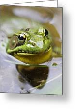 Frog And Fly Greeting Card
