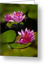 Frog And Water Lily Greeting Card