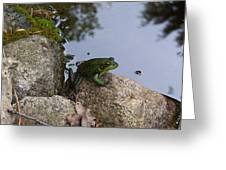 Frog At Edge Of Pond Greeting Card
