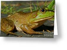 Frog At Night Greeting Card