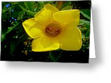 Frog Bonnet Greeting Card