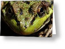 Frog Face Greeting Card